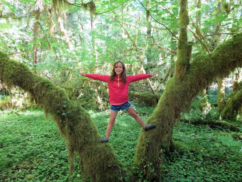 Z tree.JPG